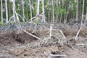 Khởi tố nguyên Trưởng ban và 2 cán bộ Ban quản lý rừng phòng hộ rút khống hàng tỷ đồng
