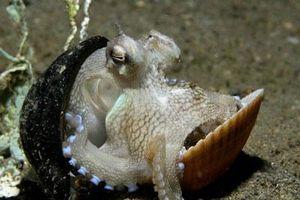 Kích thích 10 bí mật gây sốc về sinh vật đáy biển sâu