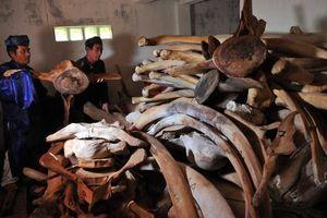 Quảng Ngãi chi 14 tỷ đồng để phục dựng bộ xương cá Voi lớn nhất Việt Nam