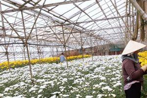 BASF hợp tác với Tân Hùng Cơ trong giải pháp màng phủ nông nghiệp công nghệ cao