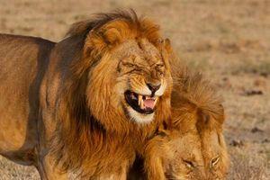 Sảng khoái nhìn ngắm động vật cười tươi hết cỡ