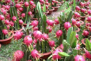 Rà soát hàng nông sản Việt chứa chất bảo vệ thực vật vượt mức cho phép