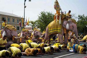 11 con voi trắng 'nhảy 10 bước' trong lễ diễu hành mừng Vua Thái Lan lên ngôi