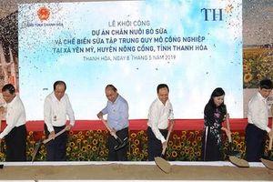 TH True Milk khởi công dự án chăn nuôi chế biến sữa bò gần 4000 tỷ đồng tại Thanh Hóa