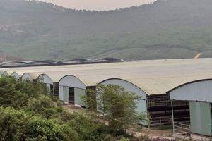 Rà soát dự án nuôi bò nghìn tỷ đồng liên quan đến cha con ông Trần Bắc Hà