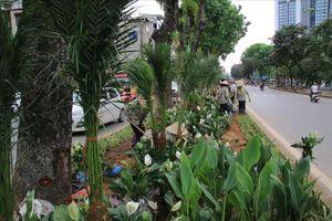Hàng trăm nghìn cây cảnh 'lấp chỗ trống' trên đường Kim Mã
