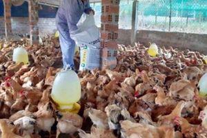 Quảng Nam: Nông dân Quế Sơn giàu lên nhờ có vốn