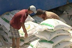 Giá xuất khẩu gạo sang thị trường hàng đầu giảm mạnh