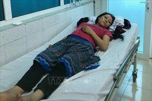 Cả gia đình dân tộc Mông nhập viện do ăn nấm độc