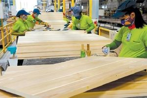 Việt Nam cam kết xây dựng hệ thống ngăn chặn nguồn gỗ bất hợp pháp
