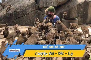 Hàng chục con khỉ vây quanh người đàn ông để xin ăn