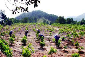 Trồng rừng thay thế khi chuyển mục đích sử dụng rừng sang mục đích khác