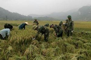 Đồn biên phòng Môn Sơn giúp dân gặt lúa