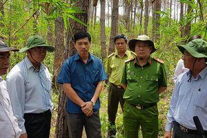 Lập chuyên án truy tìm thủ phạm 'đầu độc' rừng thông