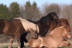 Soup sáng: Xúc động hình ảnh 'một con ngựa đau, cả tàu bỏ cỏ'