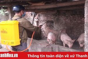 Tĩnh Gia thêm 3 xã xuất hiện Dịch tả lợn châu Phi