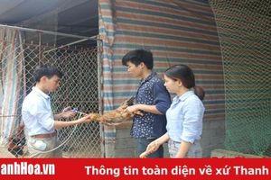 HTX dịch vụ chăn nuôi gà ta Thanh Hóa: Doanh thu mỗi tháng đạt khoảng 2,5 tỷ đồng