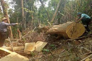 Đắk Lắk: Thành lập Ban Chỉ đạo công tác bảo vệ rừng