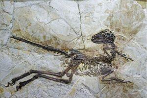 Hóa thạch khủng long có cánh hé lộ quá trình tiến hóa bất ngờ
