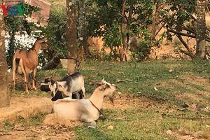 Cú 'huých' từ giảm nghèo ở Quảng Ngãi
