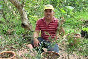 Bến Tre: Kỹ sư về trồng chanh móng tay, nhánh bé tý bán 350 ngàn