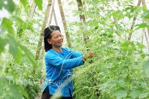 Hà Giang: Thung lũng hoang vắng trồng mướp đắng rừng, bán cả lá, thân, quả
