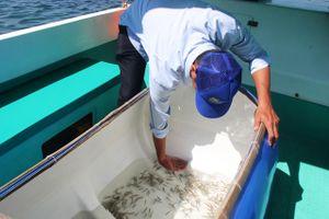Khánh Hòa: Người dân, du khách hứng khởi trông cây xanh, thả cá giống bảo vệ biển đảo