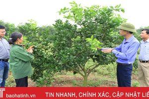 'Thấm' nông nghiệp 4.0, nhà nông Hà Tĩnh dùng công nghệ sinh học 'nuôi' cam VietGap
