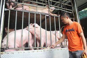 Người dân TP Hồ Chí Minh không quay lưng với thịt heo