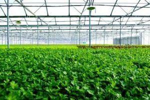 BASF 'bắt tay' Tân Hùng Cơ hỗ trợ nông dân tăng năng suất