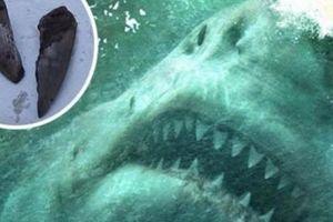 Mỹ: Phát hiện răng cá mập bạo chúa Megalodon thống trị biển cả 3 triệu năm trước
