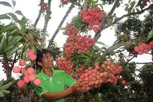 Nhiều trái cây Việt được giá, tự tin về các tiêu chuẩn an toàn