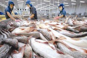 Nhật Bản nằm trong top 10 thị trường xuất khẩu cá tra lớn nhất của Việt Nam