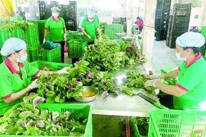Tư duy 'ăn xổi' đang làm khó nông sản Việt