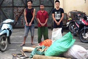 Bắt giữ 3 đối tượng trộm cắp gỗ sưa trong rừng đặc dụng