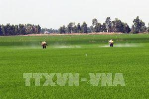 Tiền Giang đảm bảo nước tưới tiêu cho lúa Hè Thu