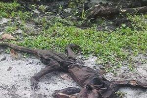 Đang thong dong đi dạo trong vườn, người phụ nữ lăn ra chết giấc khi thấy một thứ kinh dị