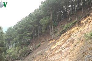 Rừng thông ở khu du lịch Mẫu Sơn đang bị khai thác ồ ạt quy mô lớn