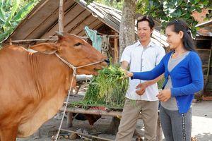 Tây Ninh: Hiệu quả từ mô hình Chi bộ Đảng đỡ đầu hộ nghèo