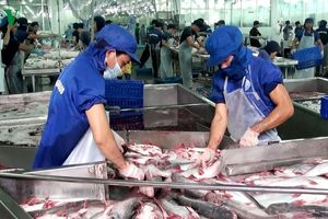 Cá tra Việt Nam chinh phục ngoạn mục thị trường Nhật Bản