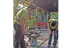 Phát hiện 7 cá thể rùa nuôi trái phép tại Bắc Trà My