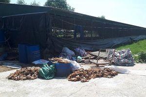 Hà Tĩnh: Đập phá trại gà trong đêm, gia chủ phải nhập viện, 1.200 con gà bị chết