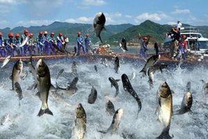 Hưởng lợi từ CPTPP cá tra chinh phục thị trường Nhật