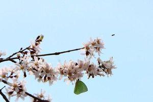 Ngắm 'bữa tiệc' hoa giữa núi rừng Ninh Thuận