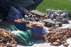 Điều tra nhóm người hành hung chủ trang trại, làm chết 1200 con gà