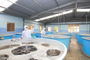 Thủy sản Minh Phú: Cổ đông nội bộ đăng ký bán 10,2 triệu cổ phiếu