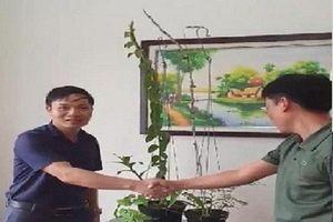 Đại gia Hà Tĩnh chi tiền mua chậu lan giá 3,5 tỷ đồng