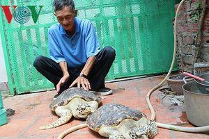 Bà Rịa - Vũng Tàu thả 2 cá thể rùa quý hiếm về biển
