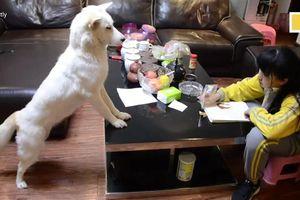 Bố huấn luyện chó cưng giám sát con gái học bài
