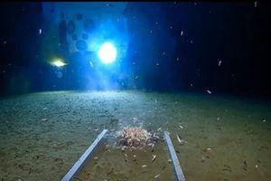 Khe rãnh ở điểm sâu nhất hành tinh có gì?
